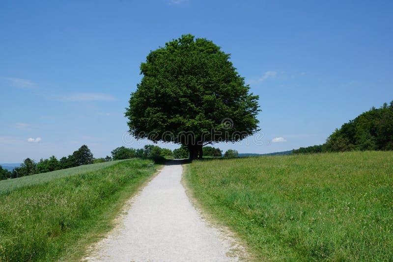 Δέντρα στο zollikon στοκ φωτογραφίες