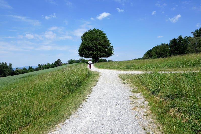 Δέντρα στο zollikon στοκ εικόνες