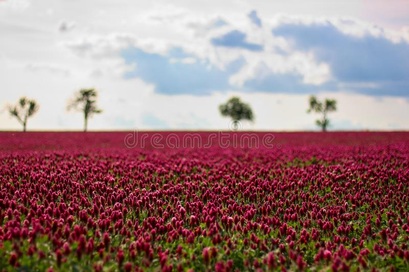 Δέντρα σύννεφων λιβαδιών flover κόκκινα στοκ εικόνες