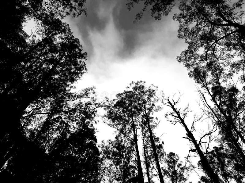 Δέντρα τέφρας βουνών γραπτά στοκ φωτογραφίες με δικαίωμα ελεύθερης χρήσης
