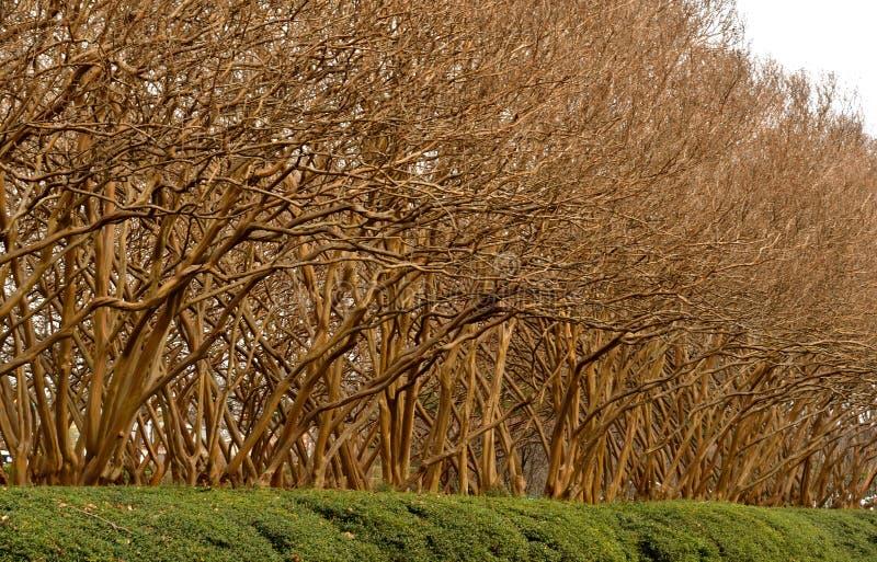 Δέντρα την πρώιμη άνοιξη με τα σύννεφα πρωινού στοκ φωτογραφία