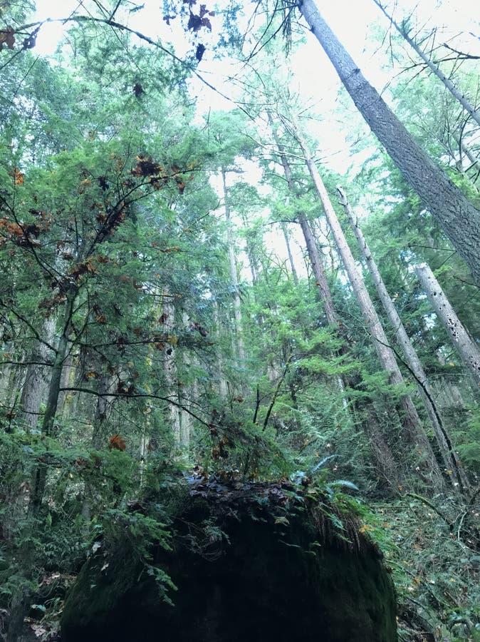 Δέντρα της Ουάσιγκτον στοκ εικόνες