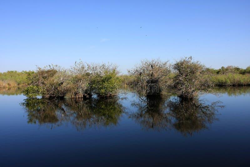 Δέντρα της Apple λιμνών ακόμα στο νερό, εθνικό πάρκο Everglades στοκ φωτογραφία