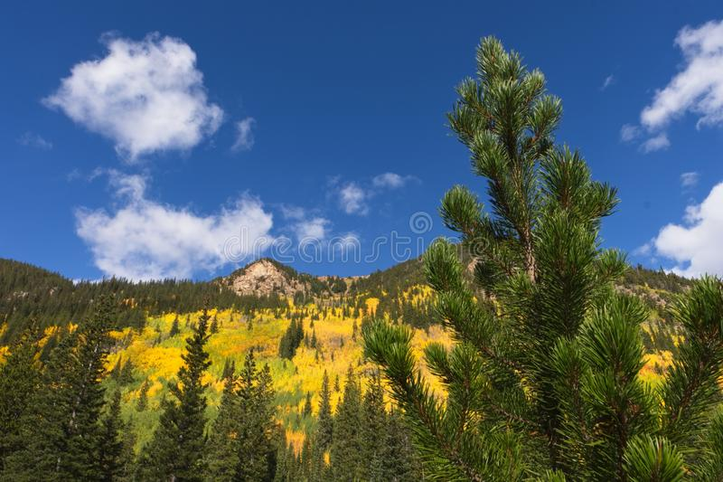 Δέντρα της Aspen στα βουνά του Κολοράντο στοκ φωτογραφίες με δικαίωμα ελεύθερης χρήσης