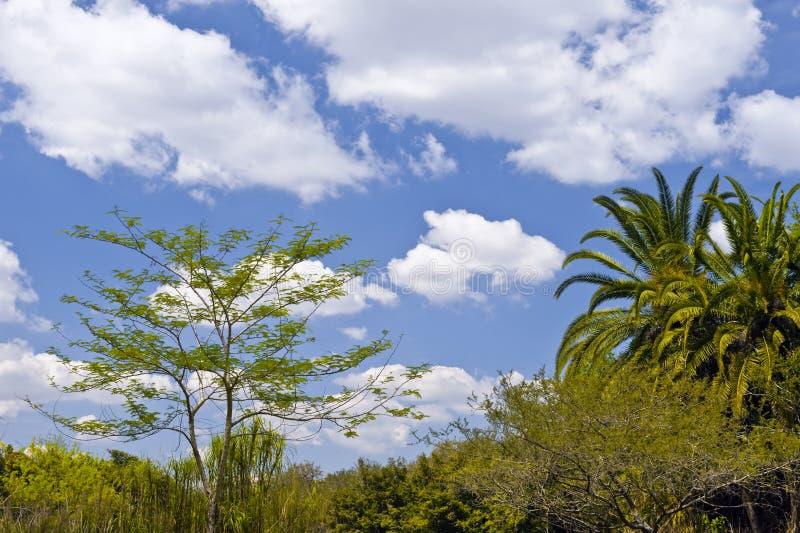 δέντρα τοπίων τροπικά στοκ φωτογραφία
