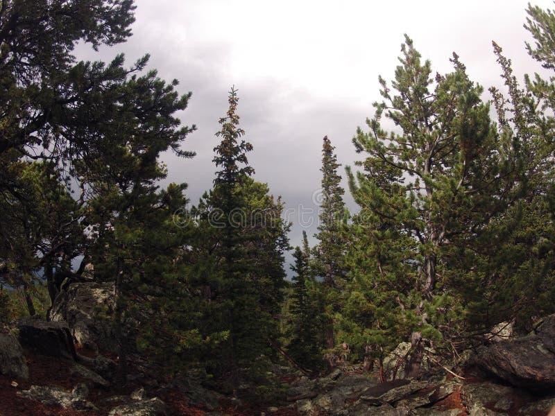Δέντρα του Κολοράντο στοκ εικόνα με δικαίωμα ελεύθερης χρήσης