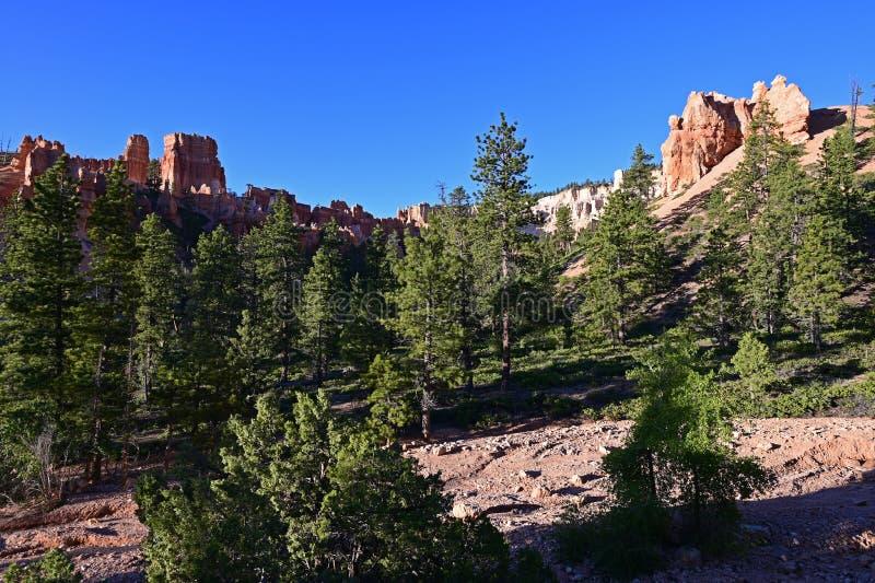 Δέντρα του FIR και σχηματισμοί βράχου στο φαράγγι του Bryce στοκ εικόνες με δικαίωμα ελεύθερης χρήσης