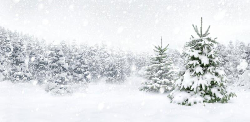 Δέντρα του FIR στο παχύ χιόνι στοκ εικόνα με δικαίωμα ελεύθερης χρήσης