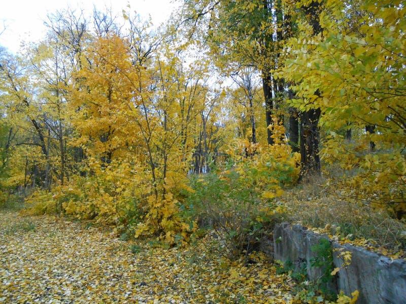 Δέντρα το φθινόπωρο στοκ φωτογραφίες