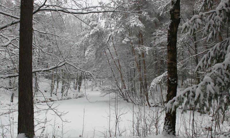 Δέντρα το χειμώνα που καλύπτεται με το χιόνι στοκ εικόνες
