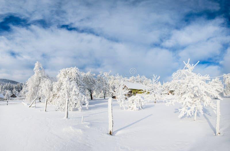Δέντρα το χειμώνα στοκ εικόνες με δικαίωμα ελεύθερης χρήσης