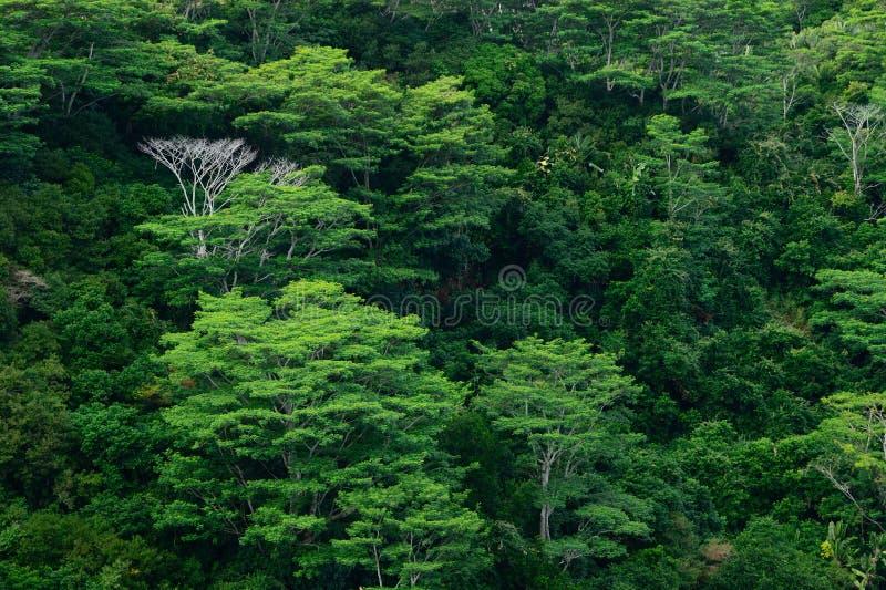 δέντρα τροπικών δασών ανασ&kappa στοκ φωτογραφία με δικαίωμα ελεύθερης χρήσης
