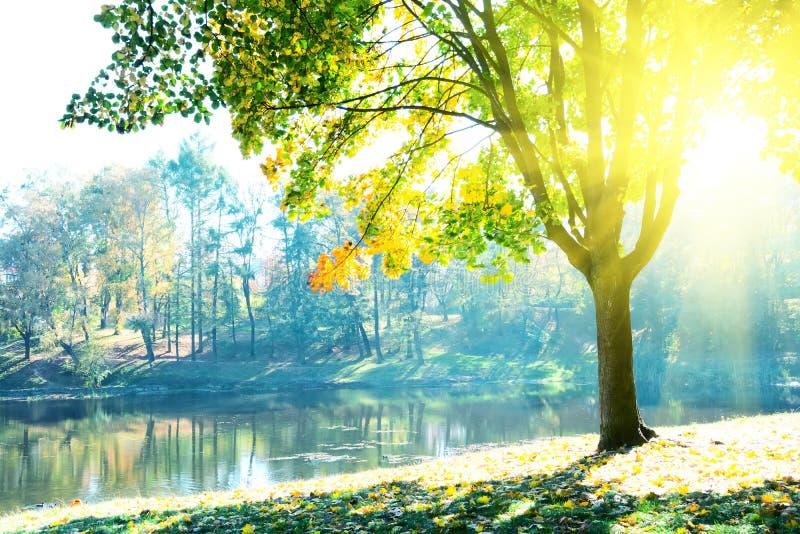 Δέντρα φθινοπώρου με τα πολύχρωμα φύλλα με την άποψη στη λίμνη Φως του ήλιου από το φύλλωμα σφενδάμνου στην ηλιόλουστη ημέρα στοκ φωτογραφίες