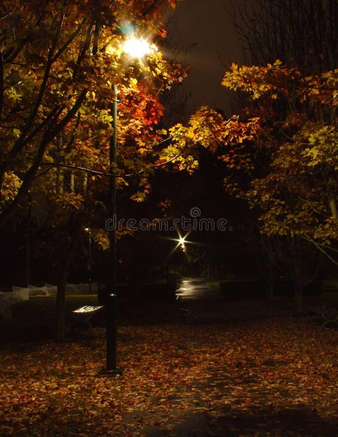 Δέντρα φθινοπώρου σε ένα πάρκο πρόωρη νύχτα στοκ φωτογραφία με δικαίωμα ελεύθερης χρήσης
