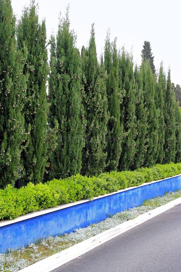δέντρα φρακτών στοκ εικόνες με δικαίωμα ελεύθερης χρήσης