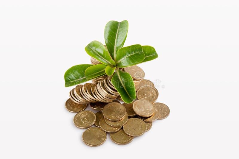 δέντρα φυτών χρημάτων κάτω στοκ εικόνα με δικαίωμα ελεύθερης χρήσης