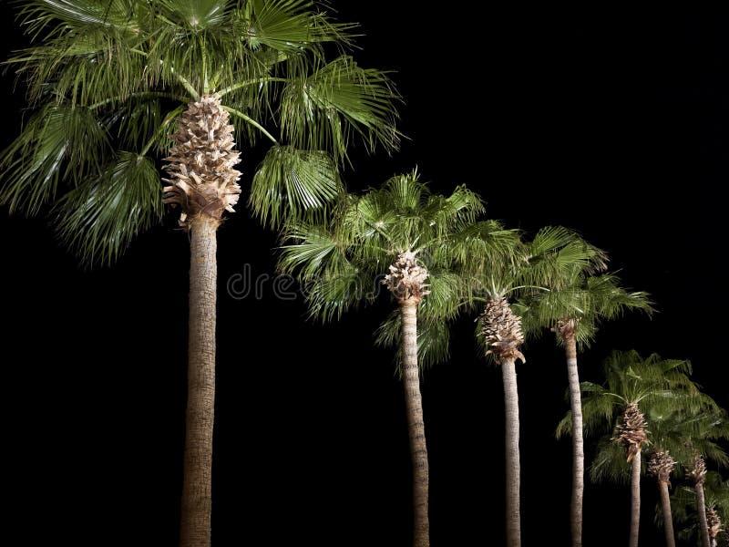 δέντρα χώρων στάθμευσης φοινικών νύχτας γραμμών στοκ εικόνες