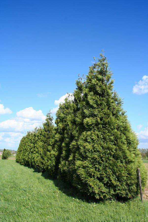 Download δέντρα στοκ εικόνα. εικόνα από βλάστηση, γραμμή, σύννεφα - 113107