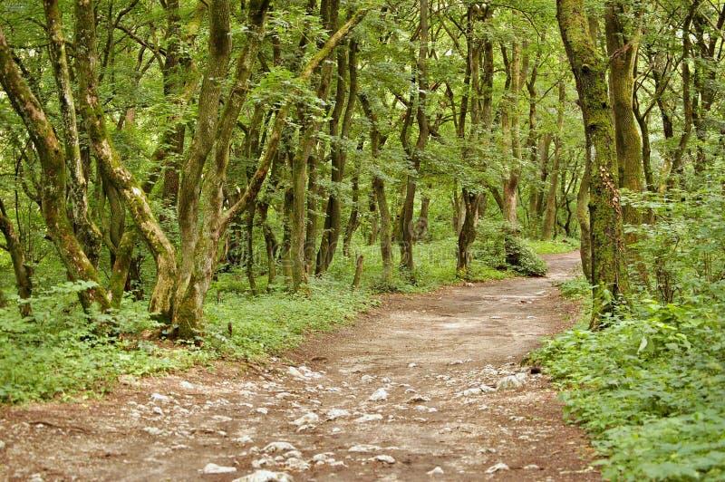 Download δέντρα στοκ εικόνες. εικόνα από δάσος, λόφος, δέντρα - 13186748