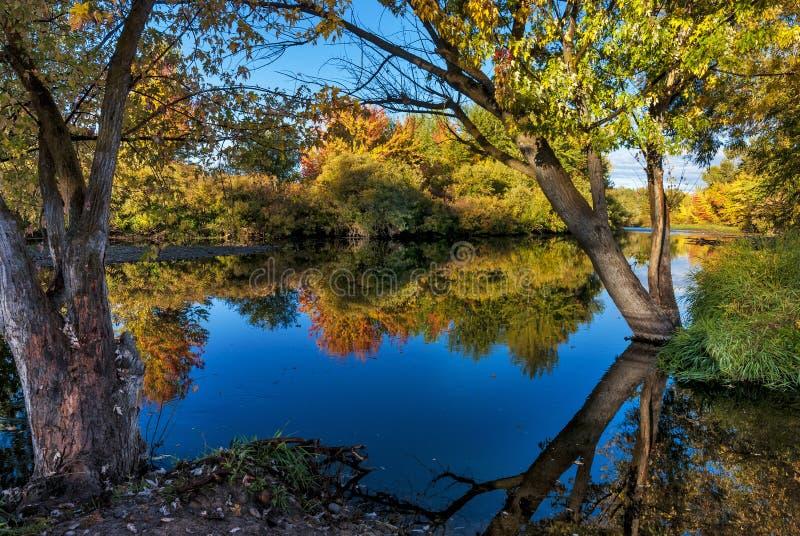 Δέντρα Autum ποταμών Boise στοκ εικόνες με δικαίωμα ελεύθερης χρήσης