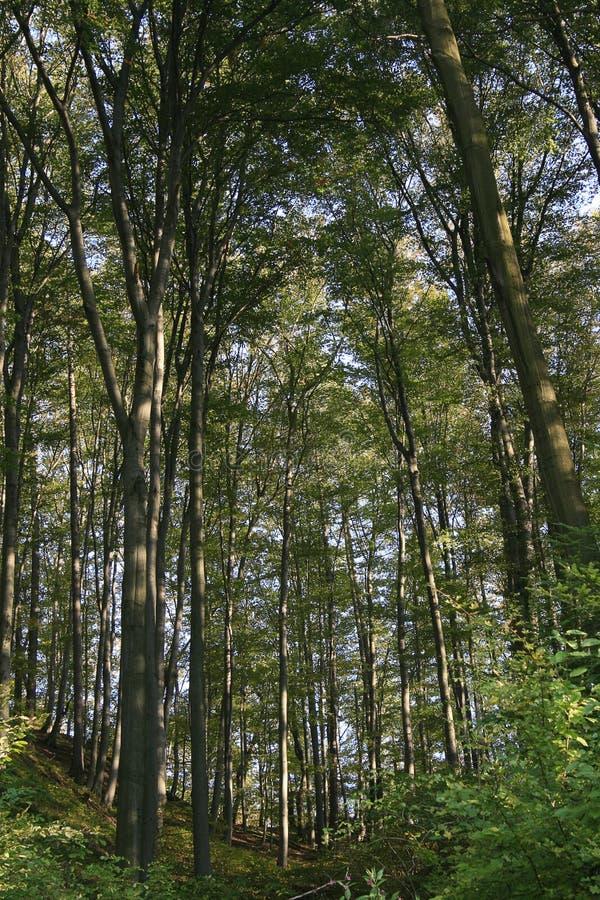 δέντρα bachorzec του 2007 στοκ φωτογραφία