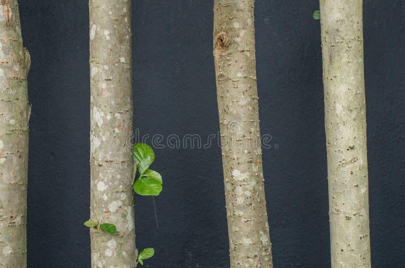 Δέντρα blackground στοκ εικόνες με δικαίωμα ελεύθερης χρήσης