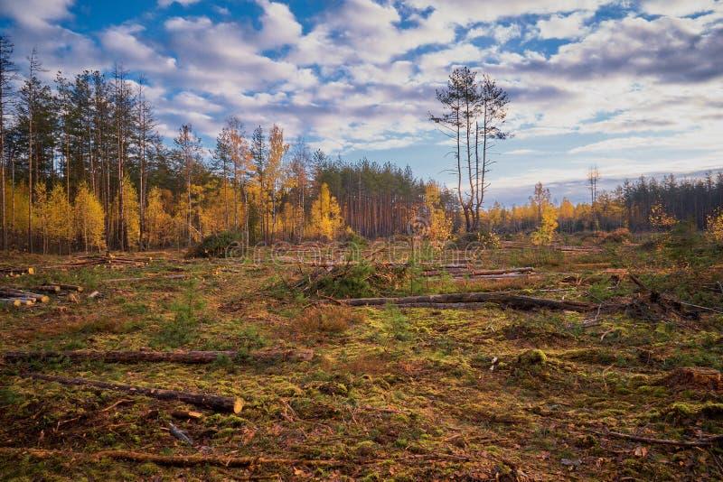 Δέντρα Cutted που βρίσκονται στο ξύλο όχι στη διαταγή σχετικά με του δάσους ευτυχούς στοκ εικόνα με δικαίωμα ελεύθερης χρήσης