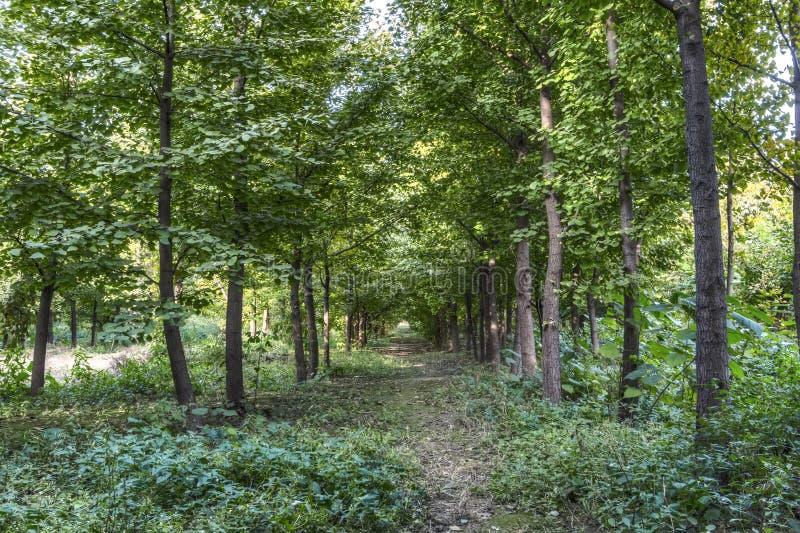 Δέντρα Ginkgo στοκ εικόνα με δικαίωμα ελεύθερης χρήσης