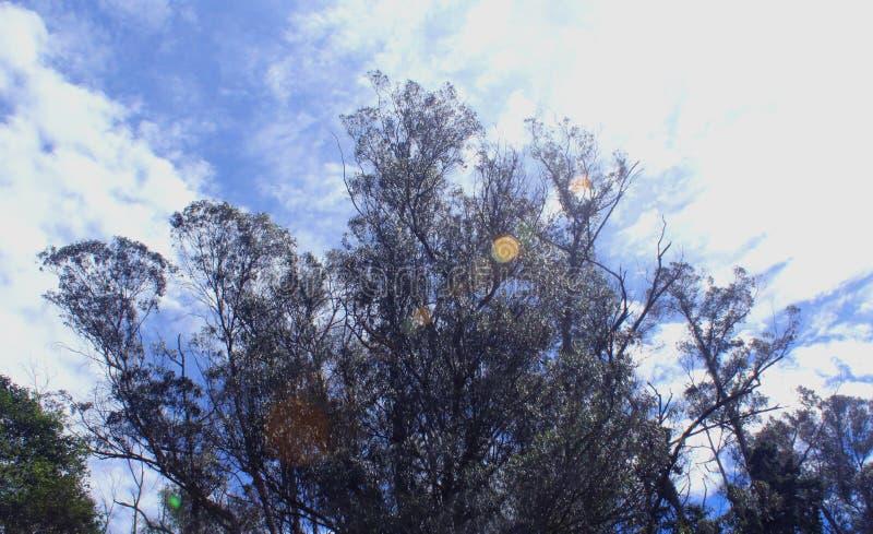 Δέντρα Hill με το φυσικό υπόβαθρο μπλε ουρανού στοκ φωτογραφία με δικαίωμα ελεύθερης χρήσης