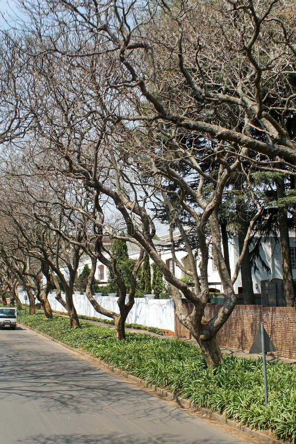Δέντρα Jacaranda κατά μήκος της πλευράς του δρόμου στο Γιοχάνεσμπουργκ στοκ φωτογραφία
