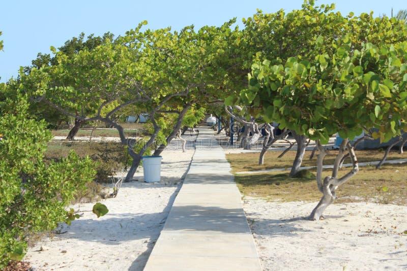 Δέντρα Madrisky στοκ φωτογραφίες