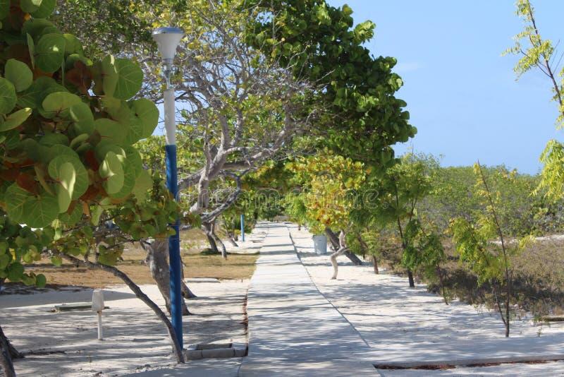 Δέντρα Madrisky στοκ φωτογραφίες με δικαίωμα ελεύθερης χρήσης