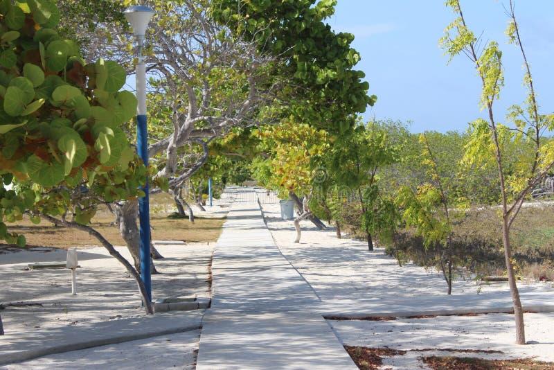 Δέντρα Madrisky στοκ εικόνα