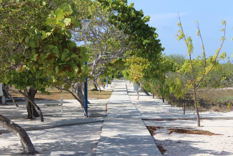 Δέντρα Madrisky στοκ εικόνα με δικαίωμα ελεύθερης χρήσης