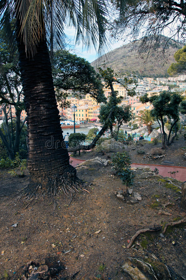 Download δέντρα nervi στοκ εικόνες. εικόνα από δάσος, χωριό, ταξίδι - 13180368