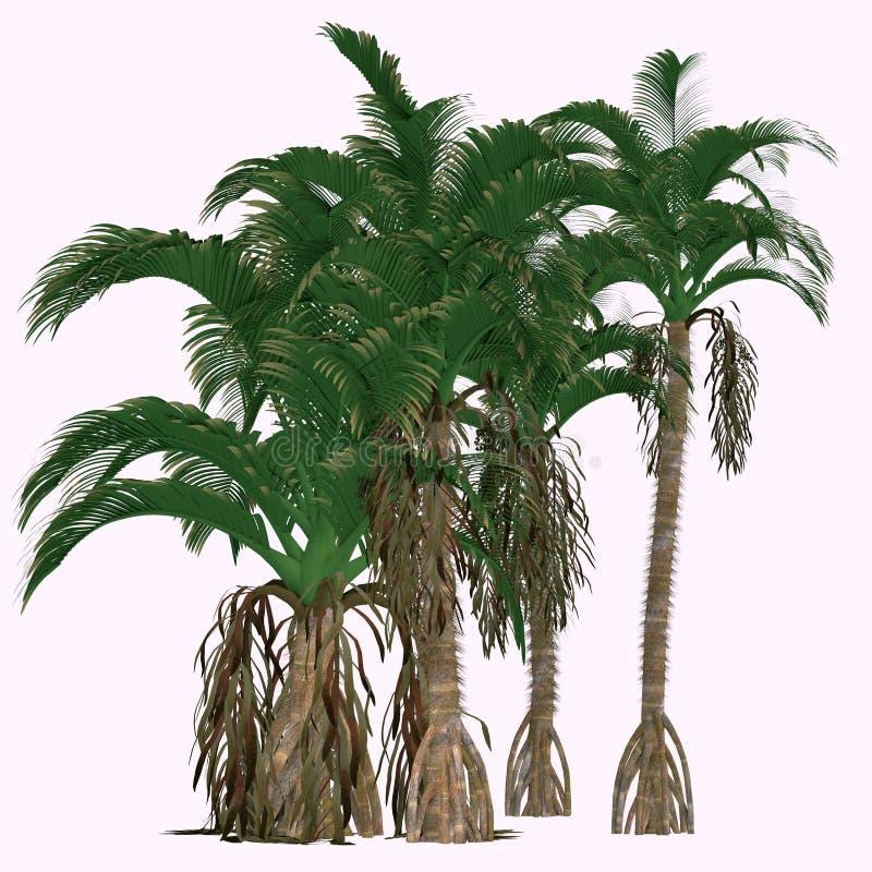 Δέντρα splendida Verschaffeltia απεικόνιση αποθεμάτων