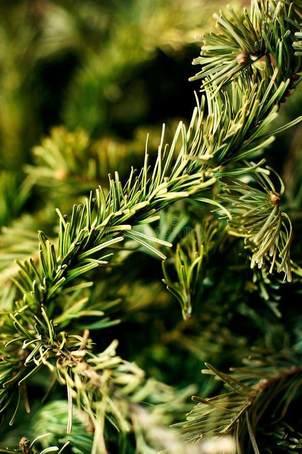Δέντρα Tqaiga στοκ εικόνες με δικαίωμα ελεύθερης χρήσης