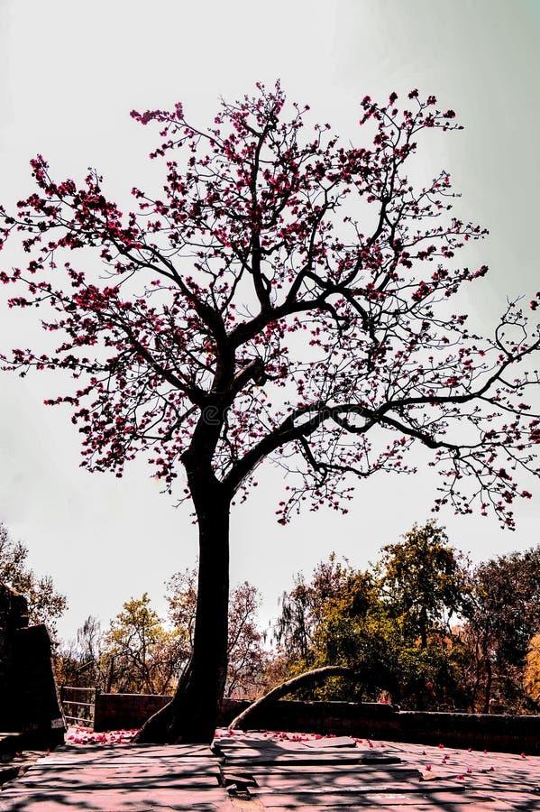 Δέντρο άνοιξη με την πλήρη άνθιση στοκ φωτογραφίες με δικαίωμα ελεύθερης χρήσης