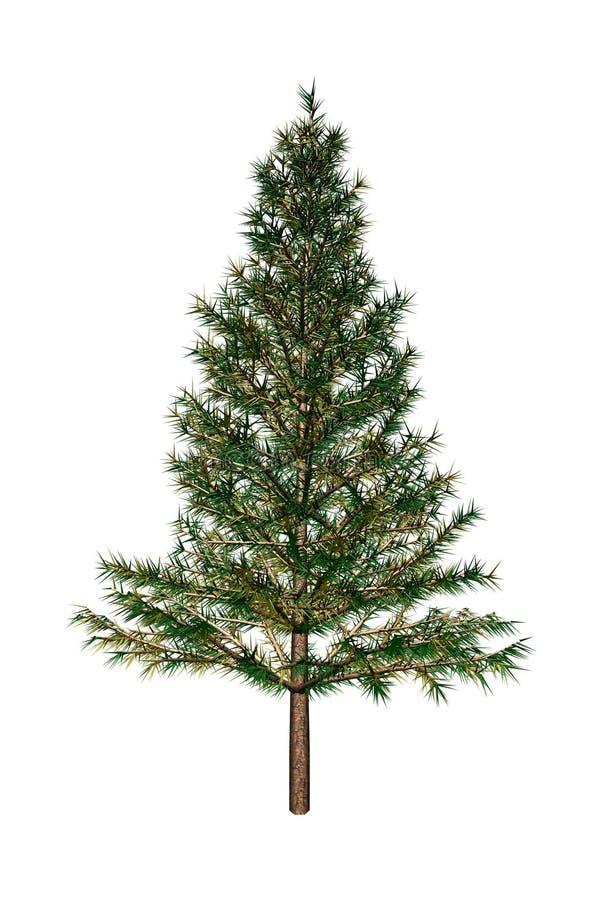 δέντρο έλατου απεικόνιση αποθεμάτων