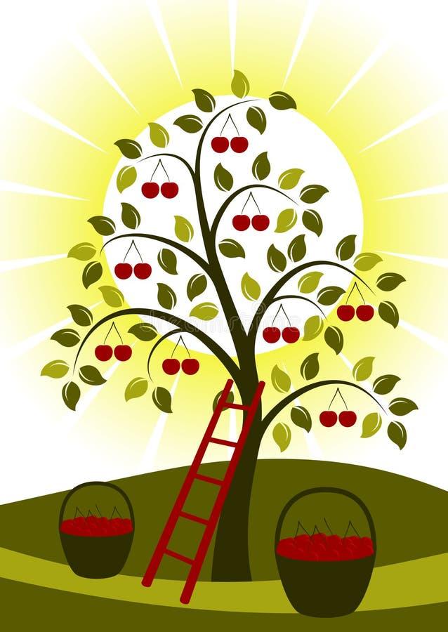 δέντρο ήλιων κερασιών ελεύθερη απεικόνιση δικαιώματος