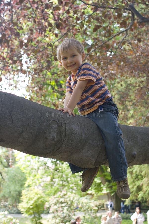 δέντρο αγοριών στοκ φωτογραφία με δικαίωμα ελεύθερης χρήσης