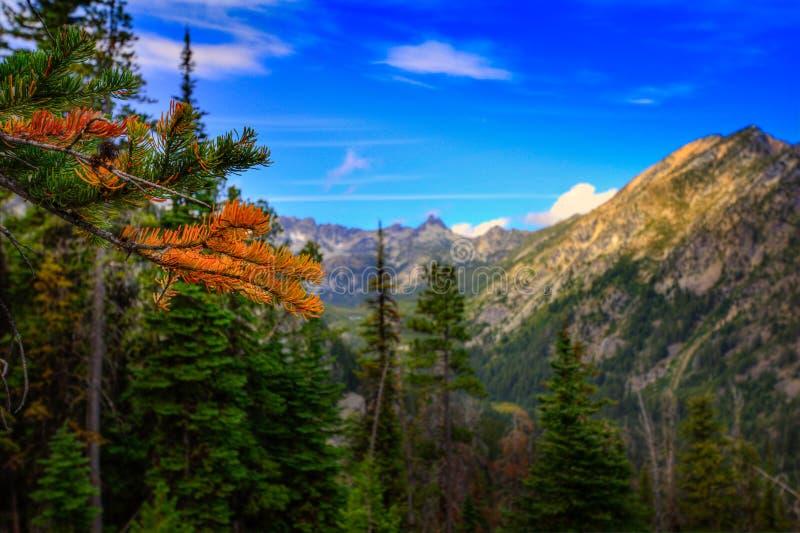 Δέντρο αγριόπευκων το φθινόπωρο που εξετάζει την κοιλάδα βουνών στοκ φωτογραφία