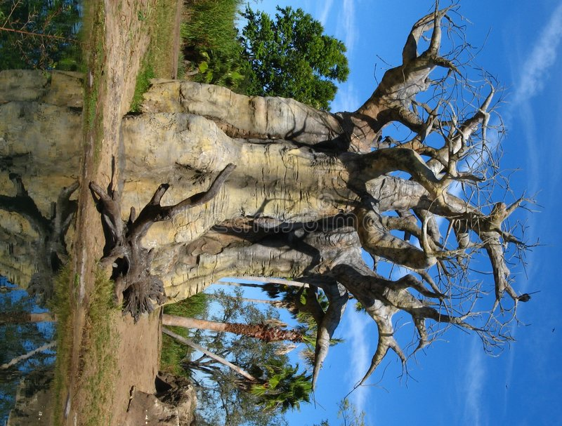Download δέντρο αδανσωνιών στοκ εικόνες. εικόνα από μοναδικός, απόκρημνος - 1527842