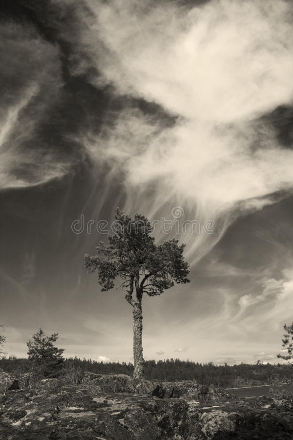Download δέντρο αναπνοής στοκ εικόνες. εικόνα από breastwork, πνεύμα - 13185586