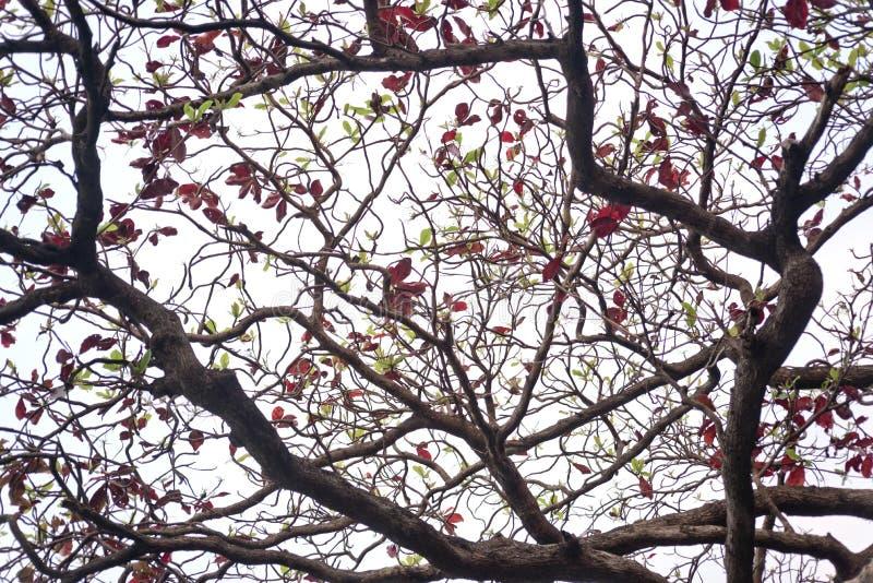 δέντρο ανασκόπησης τροπι&kappa στοκ φωτογραφία με δικαίωμα ελεύθερης χρήσης