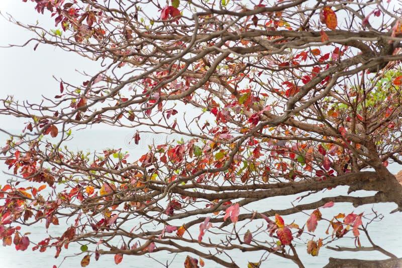 δέντρο ανασκόπησης τροπι&kappa στοκ φωτογραφία