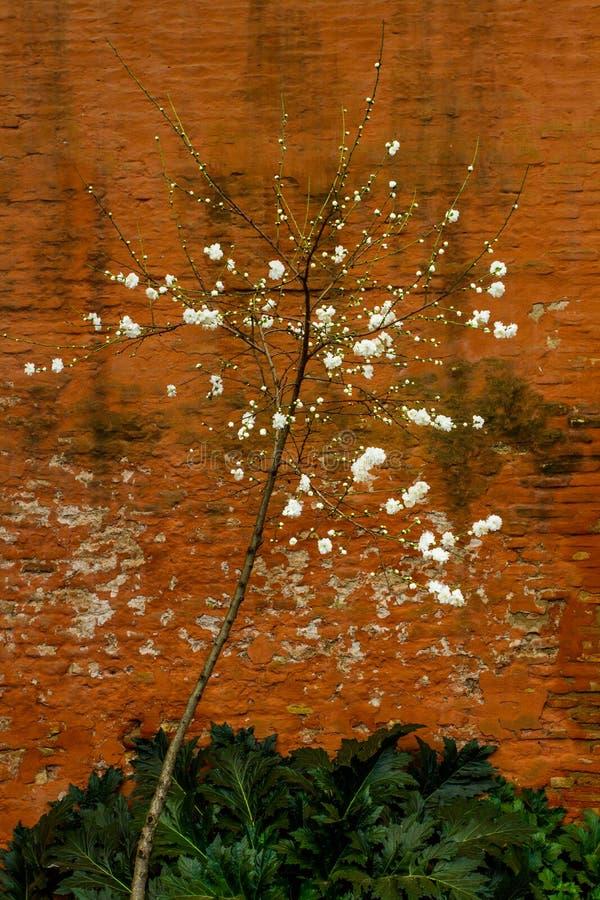 Δέντρο ανθών στοκ φωτογραφία με δικαίωμα ελεύθερης χρήσης