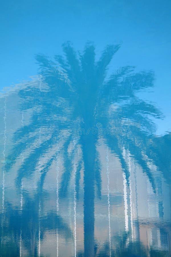 δέντρο αντανάκλασης φοινικών στοκ εικόνα με δικαίωμα ελεύθερης χρήσης