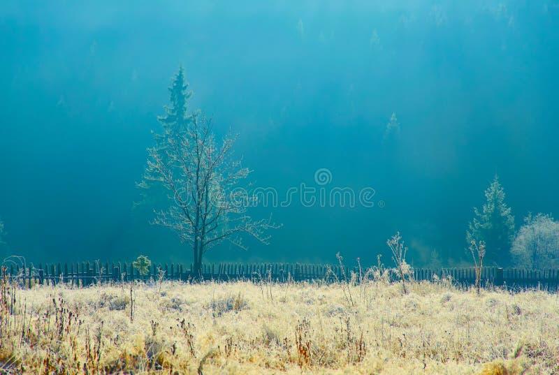 δέντρο απεικόνισης ξέφωτων vectorian στοκ εικόνα με δικαίωμα ελεύθερης χρήσης