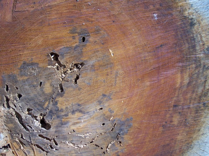 δέντρο αποκοπών κερασιών στοκ φωτογραφία